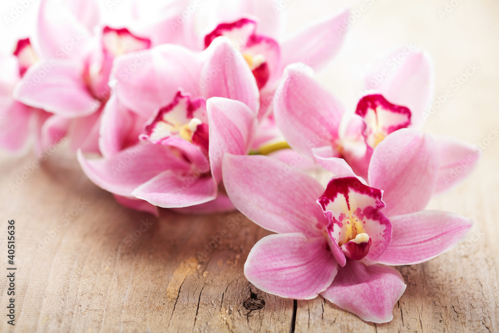 Fototapety, obrazy: Różowe kwiaty orchidei