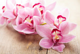 Fototapeta Orchid - pink orchid flowers