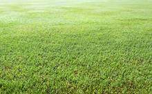 Green Grass Background Texture Straight