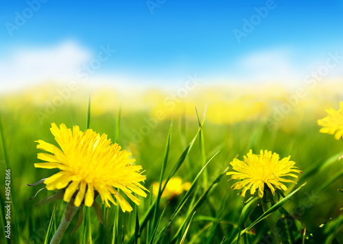 pole-wiosennych-kwiatow