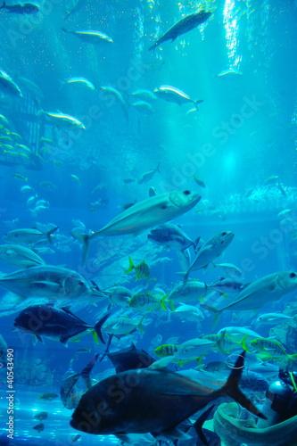akwarium-z-rybami-i-rafa