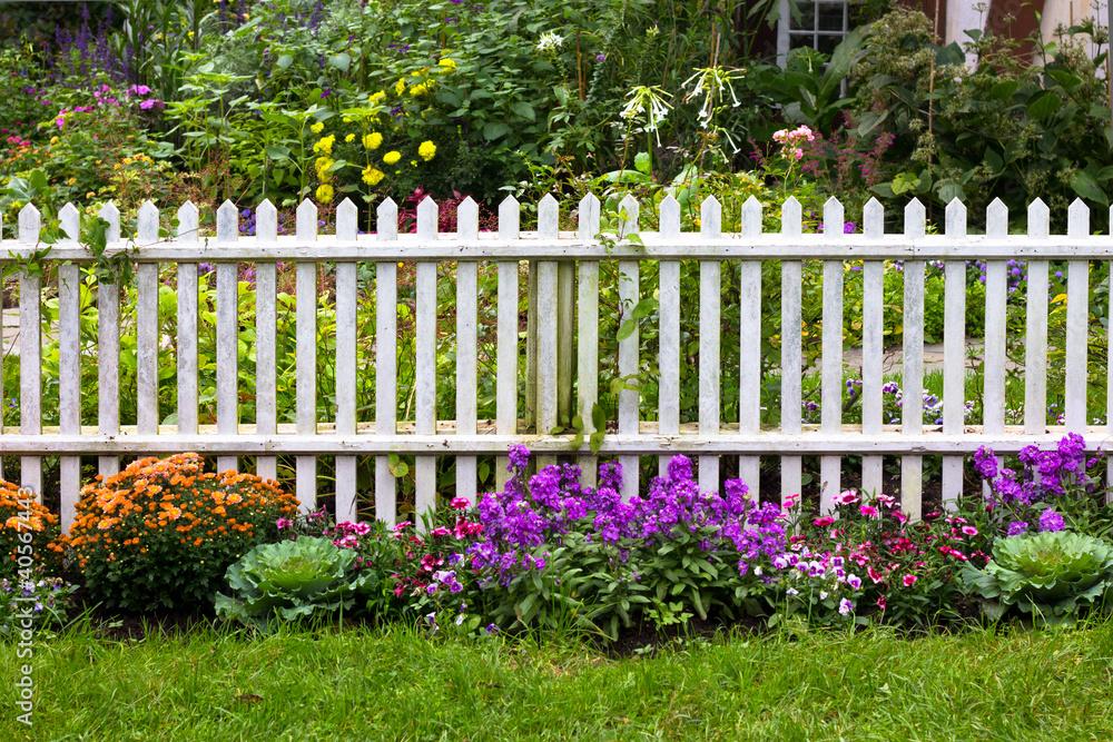 Fototapeta White picket fence surrounded by garden flowers in yard