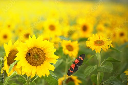 Poster Jaune Farben des Sommers