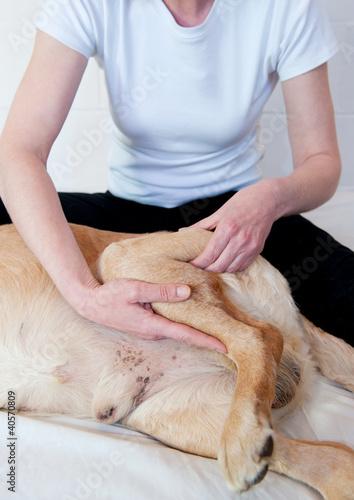 Canine Massage Canvas Print