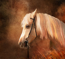 Horse Portrait. Simulation Of ...