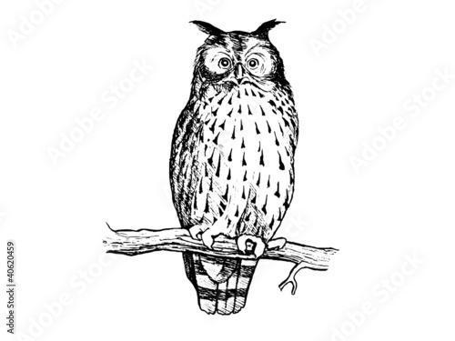Photo Stands Owls cartoon hibou