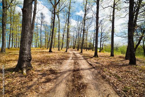 droga-gruntowa-w-lesie