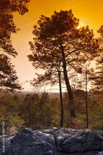 Foto op Plexiglas Bruin forêt de Fontainebleau
