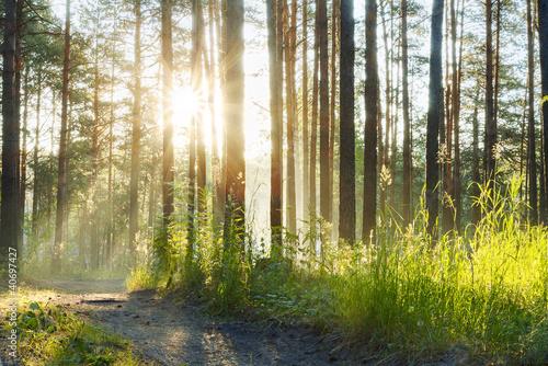 Fotobehang Natuur foggy woods