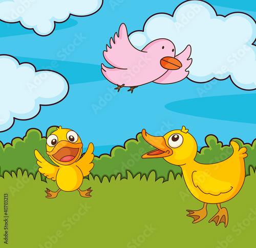 Poster Vogels, bijen Bird in a field