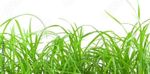 herbe-cyperus-rotundus-souchet-oumine