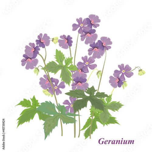 Fotomural Bush geranium
