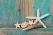 canvas print picture - Strandgut - Muscheln und Seestern