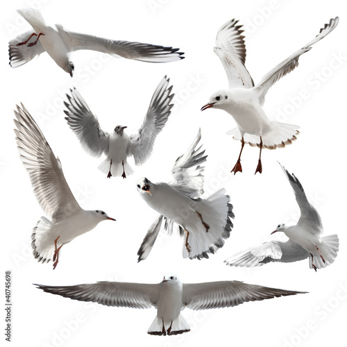 Seagulls Isolated Poster Mural XXL
