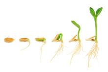 Sequence Of Pumpkin Plant Grow...