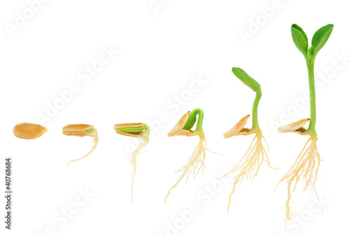 Staande foto Planten Sequence of pumpkin plant growing isolated, evolution concept