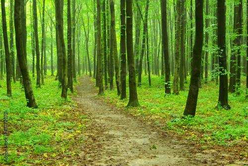 Spoed Foto op Canvas Weg in bos green forest