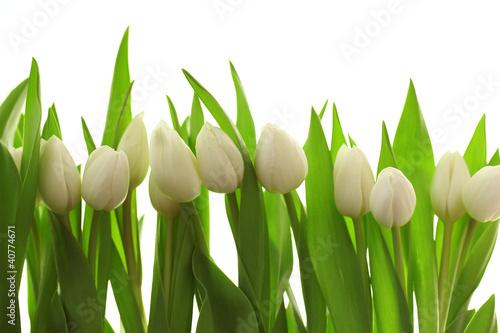 Fotobehang Tulp Weiße Tulpen