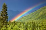 Fototapeta Tęcza - Rainbow over forest