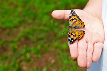 Spring Concept Of Child Holding A Painted Lady Butterfly