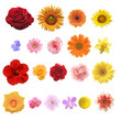 Leinwanddruck Bild - 色々な花の素材