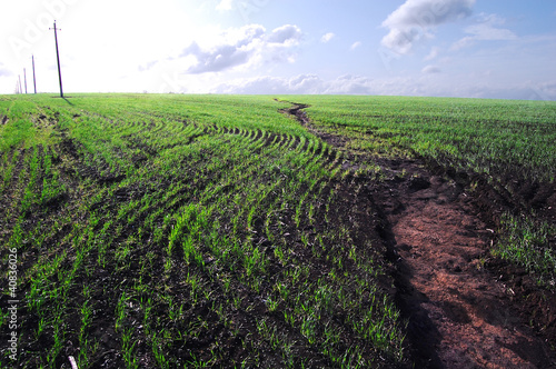 Tableau sur Toile Vegetation of winter wheat and errosion of soil