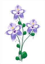 Blue Columbine Flower