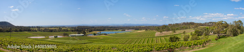 Wall Murals Vineyard Hunter Valley, Vineyards on hillside Panorama, NSW Australi