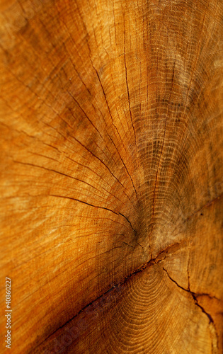 cutted tree texture #40860227