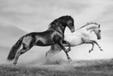 biegają konie - 40870436