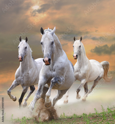 biale-konie-w-kurzu