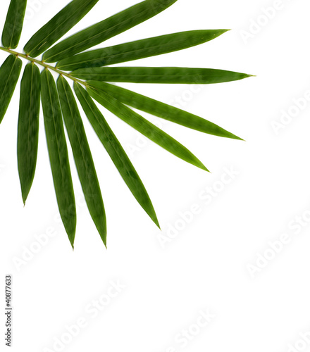 Poster Vegetal bamboo isolated on white background