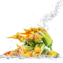 Fiori Di Zucca Splash