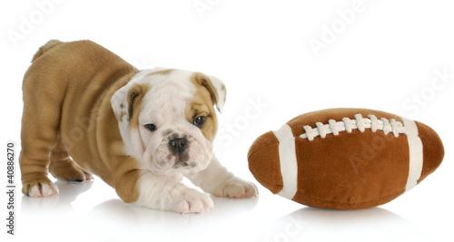 Obraz na plátně  playful puppy