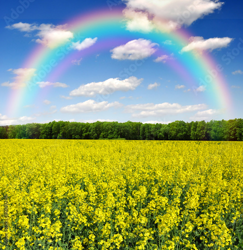 Poster Jaune rapeseed field with rainbow