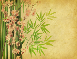 Fototapeta Bambus bamboo and plum blossom on old antique paper texture