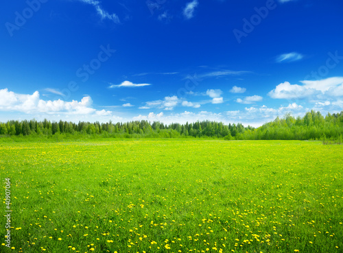 Poster Lime groen field of spring flowers and perfect sky