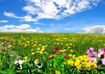 Panel Szklany Podświetlane Do dentysty Landschaft Wiese Himmel Frühling Blumen