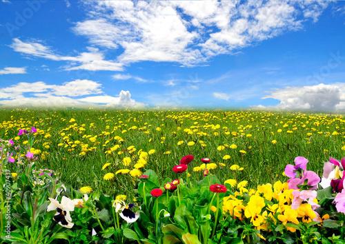 Landschaft Wiese Himmel Frühling Blumen - 40907437