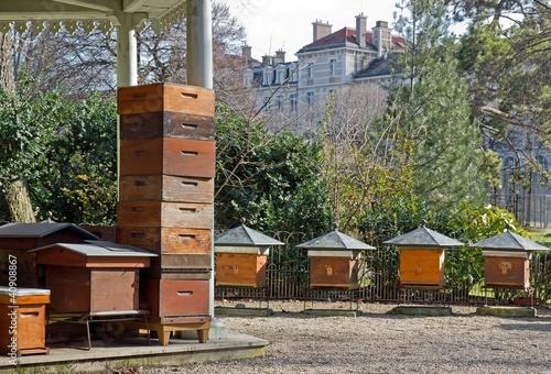 Fotografia, Obraz  ruches en ville (Paris France)