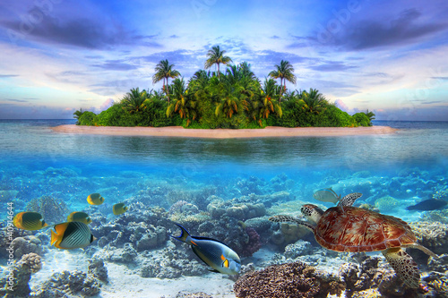 Ingelijste posters Eiland Marine life at tropical island of Maldives