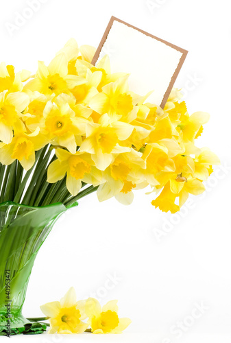 Garden Poster Narcissus Beautiful spring flowers in a glass vase with banner add