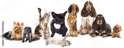 Deurstickers Franse bulldog Group of cats and dogs in front of white background