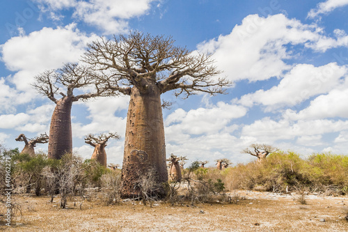 Recess Fitting Baobab Baobab trees and savanna
