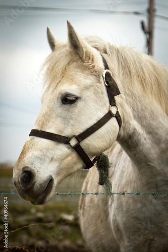 portret-konia