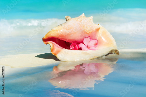 Fotografia, Obraz Conch Shell on The Beach Sand. Caribbean