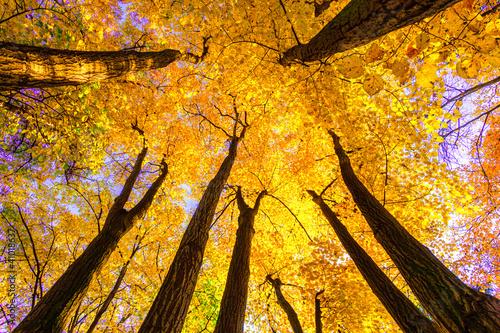 las-bukowy
