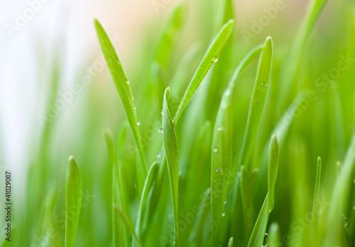 swieza-zielona-trawa-z-kroplami-na-nim