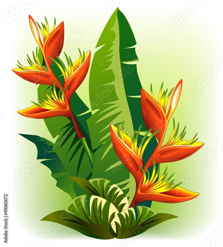 Foto  Heliconia-Fiore Rosso Tropicale-Tropical Red Flower-Vector