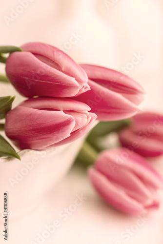 martwa-natura-rozowe-tulipany-na-jasnorozowym-tle